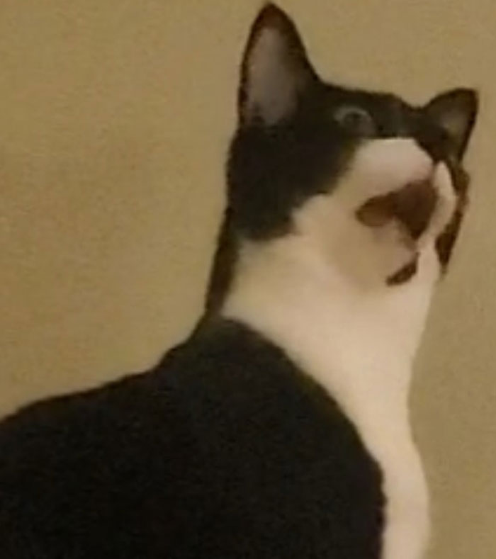 Unflattering-Funny-Cat-Photo-Challenge