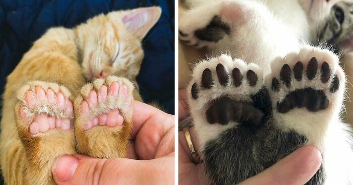 133 Pets Whose Genetics Made Them Unique