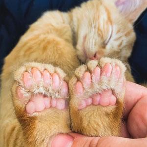 40 Mascotas con genes únicos que les han dado un aspecto realmente peculiar