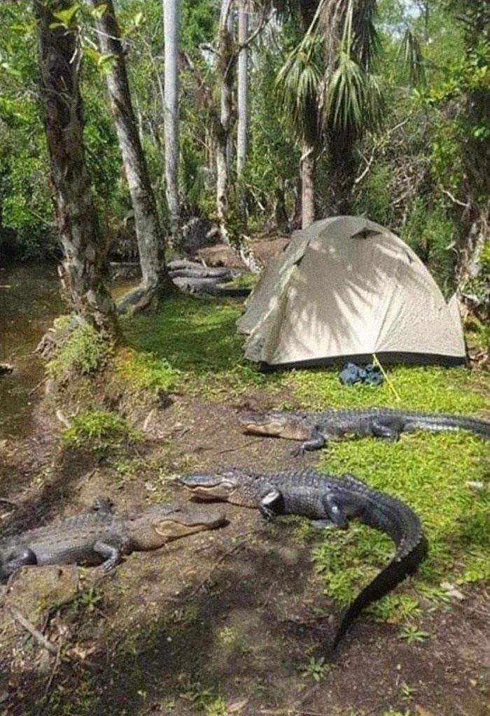 Parece divertido acampar en Florida
