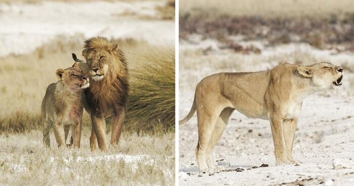 Here Are My 37 Favorite Photos That I Took In Etosha Pan In Africa