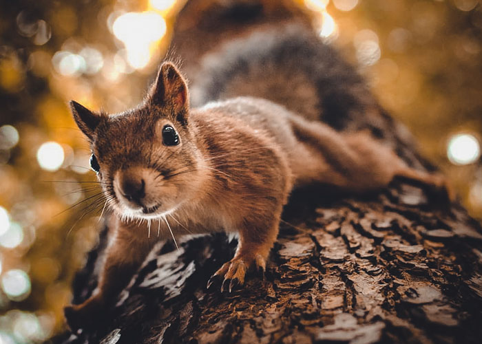 I Spent Two Years Photographing Squirrels In The Finnish Wilderness And Their Expressions Are Adorable (38 Pics)