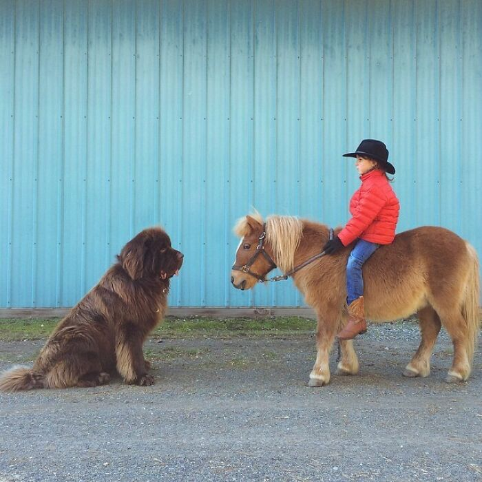 A Dog Or A Pony?