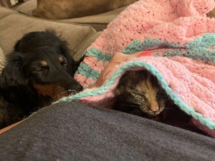 The Night We Found Ginger. (Frankie Fell Asleep Watching Her Sleep)