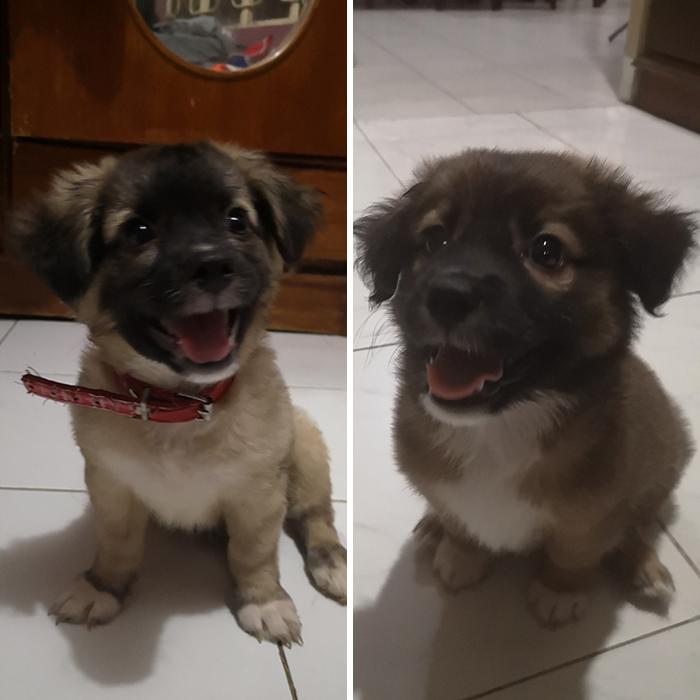 Left = Oreo = Father. Right = Milo = Oreo's Son