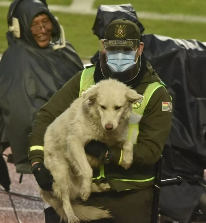 Stray Dog Interrupts A Pro Soccer Match In Bolivia, Gets Adopted By A Player Who Carried Him Off The Field