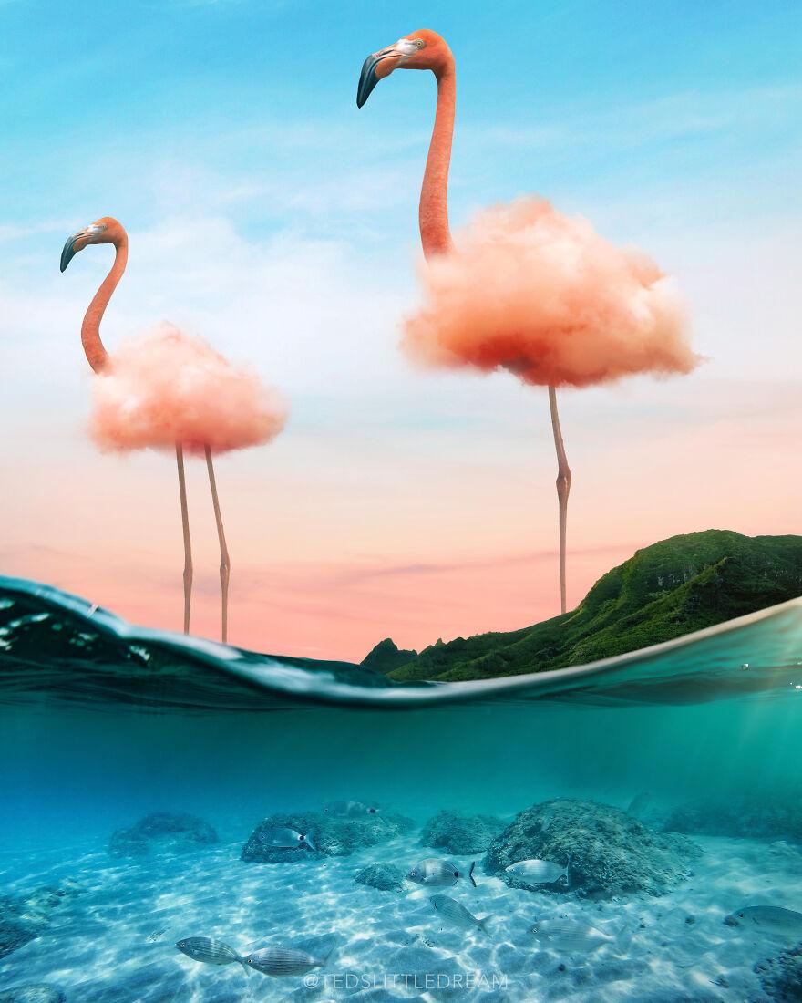 Flamingo Cloud - Photoshop 2021 Splash Photo