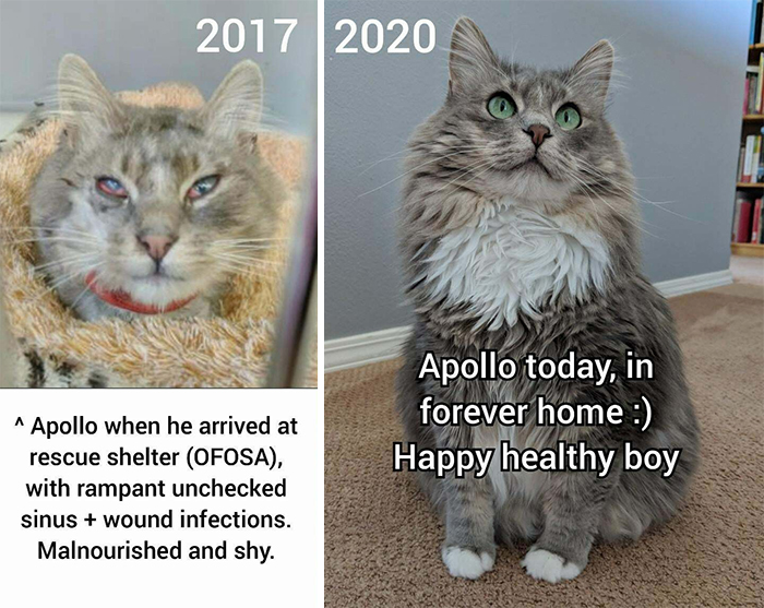 Apollo Has Given Us Just As Much As We Have Been Able To Give Him