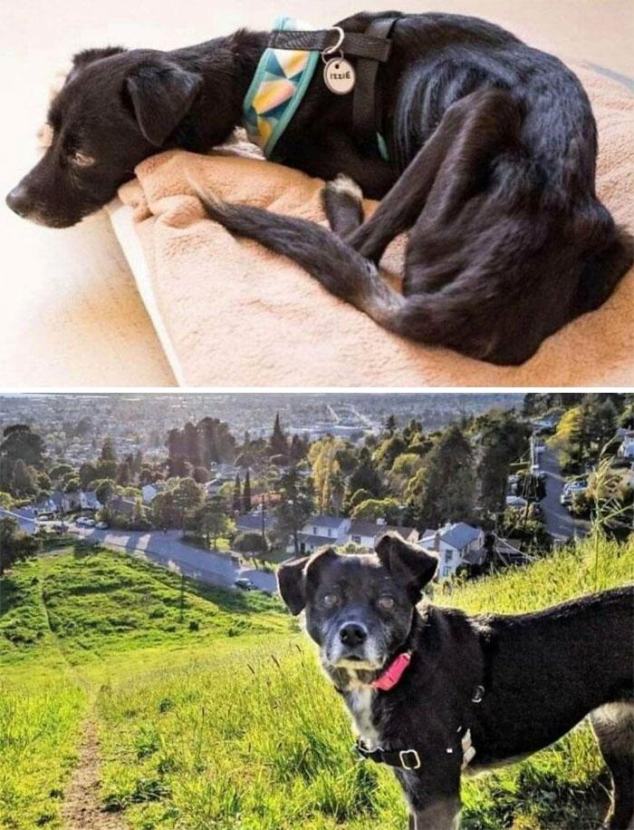 Izzie, Rescued By Muttville Senior Dog Rescue