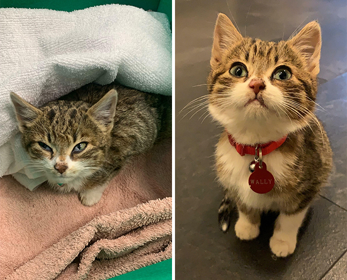 I Found This Kitten Dumped In The Middle Of A Road Too Weak And Hungry To Get To Safety. The Photo On The Right Is What 6 Days Of Cuddles By The Fireplace, Lots Of Food And A Cosy Bed Can Do