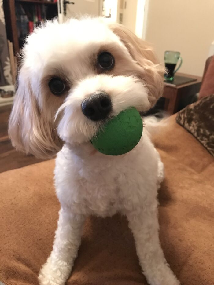 Please Can We Play Fetch, Please?