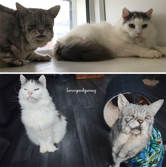 Toby And Quinton Were Rescued Together And Adopted As A Bonded Pair. Toby Has Ehlers Danlos Syndrome And Quinton Was Toothless. They Became Brave And Happy . Quinton Passed Away Recently, I'm So Glad We Had Him For The Time We Did And He Passed Knowing We Would Keep His Best Friend Safe