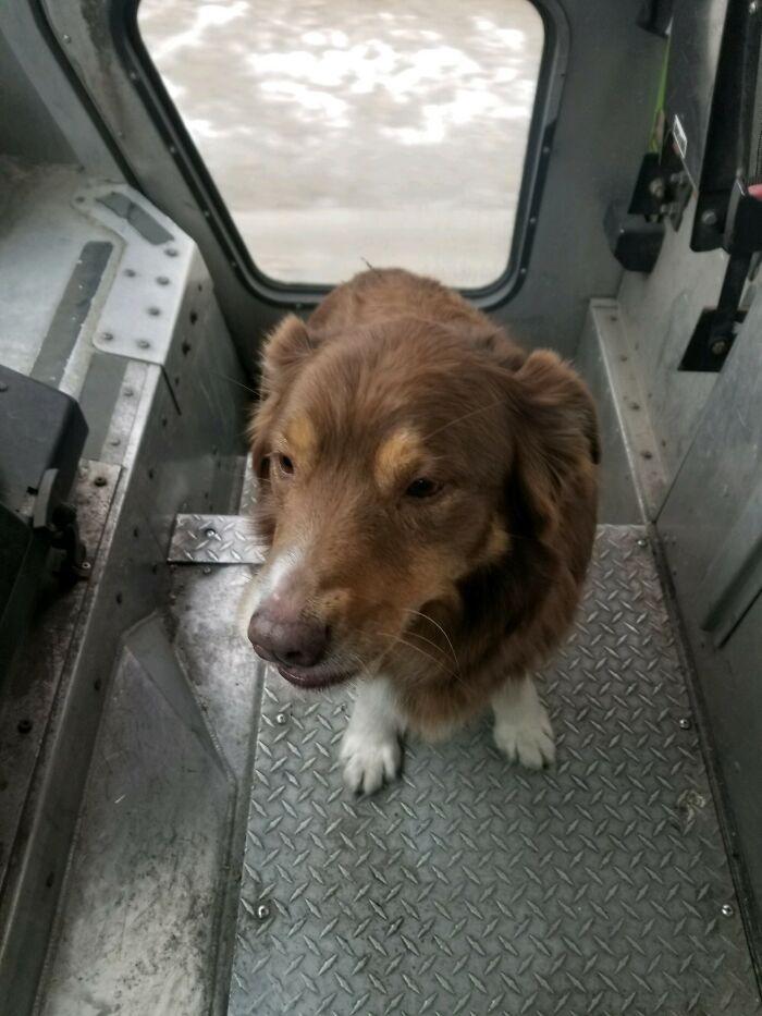 Mi marido es conductor de FedEx. Hoy encontró un perro perdido y lo recogió en su camión. Se fue con él hasta que lo devolvió a su dueño de forma segura