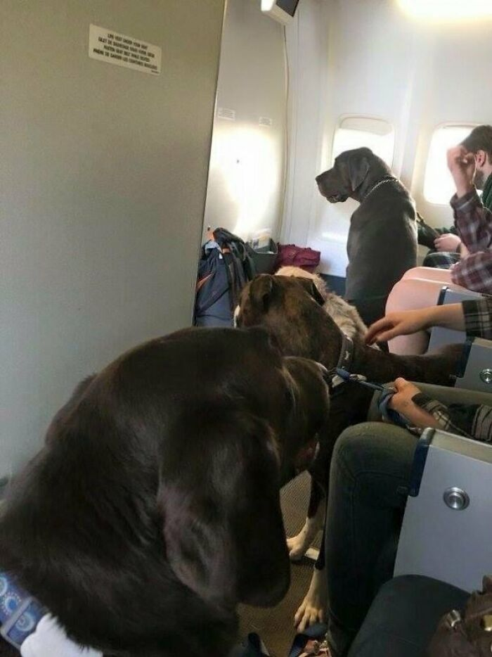 Pets Take Over Plane Cabin On Fort Mcmurray Fire Evacuee Flight