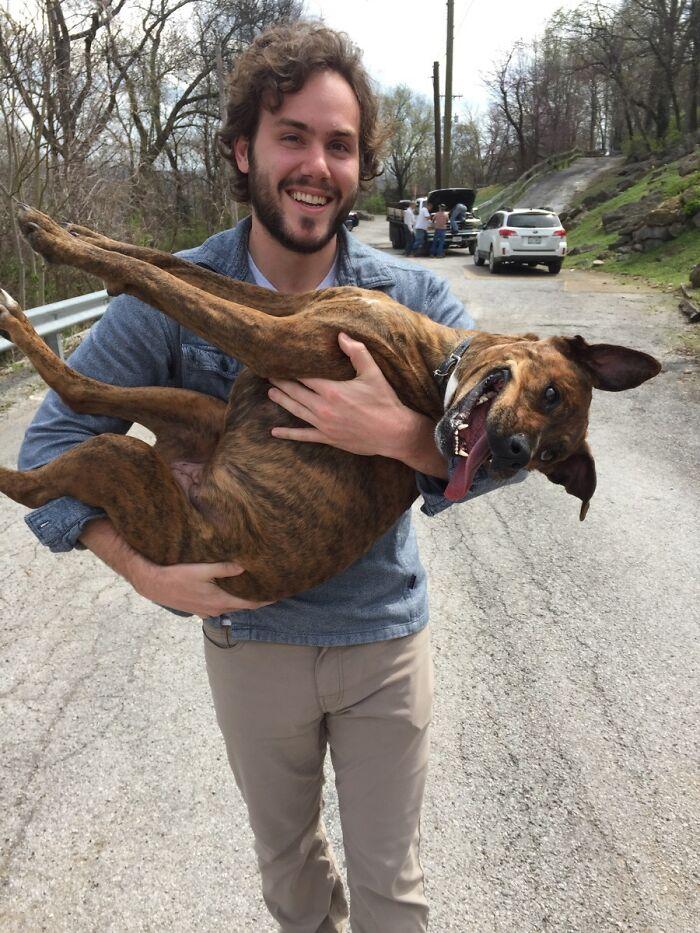 La perra de mi amigo estuvo perdida durante las últimas 30 horas, ¡pero finalmente la encontraron! Así fue el reencuentro