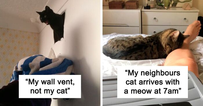 45 Of The Best 'My House, Not My Cat' Moments That Have Ever Happened To Humans (New Pics)