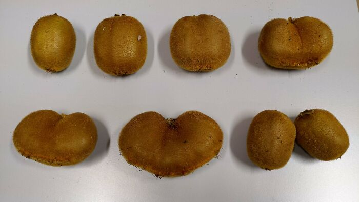 Our Kiwi Vine Produces Mostly Twins And Triplet Fruits, Enough To Showcase The Cell Division Process