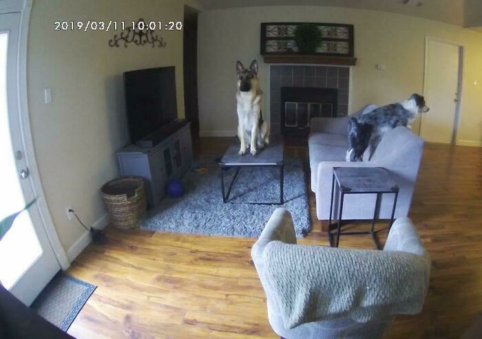 He puesto una cámara para ver qué hacen mis perros cuando no estoy