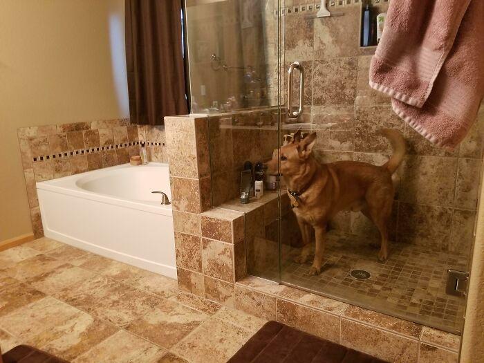Se quedó atrapado en la ducha por la noche, me desperté con sus quejidos