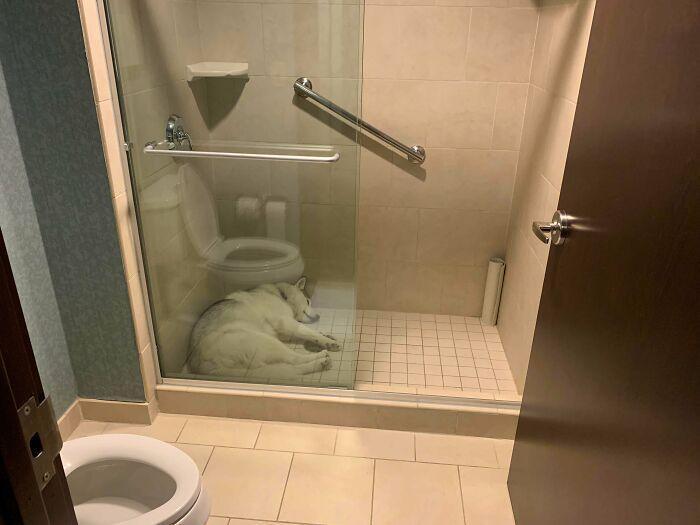 Su primera vez en un hotel. Ha elegido dormir en la ducha