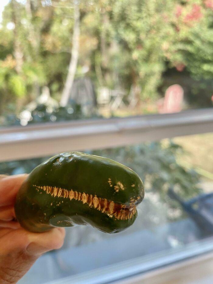 Este Jalapeño parece un Tiranosaurio Rex
