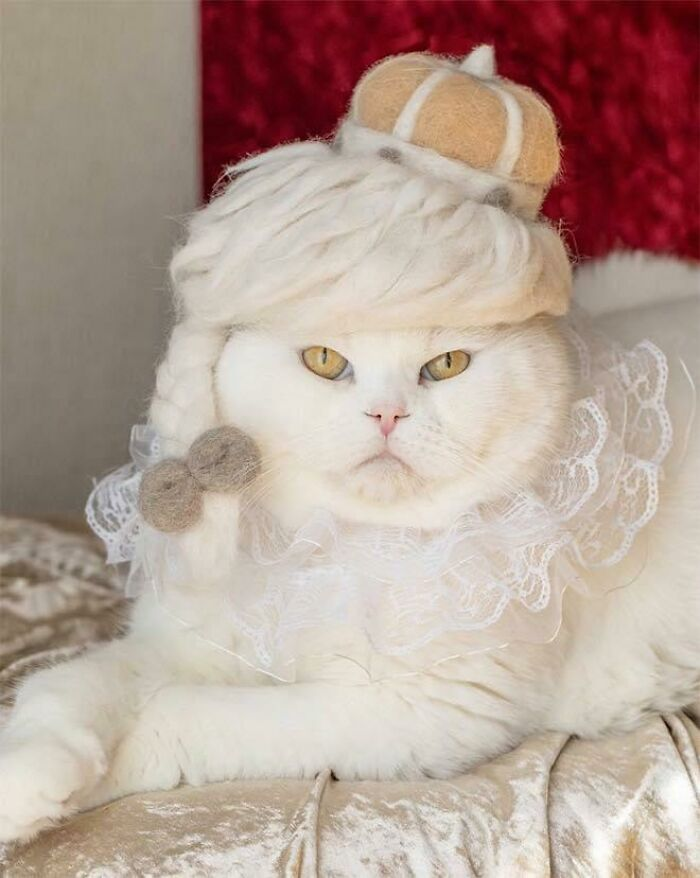 A Cat With A Headpiece Made From Its Own Shed Hair