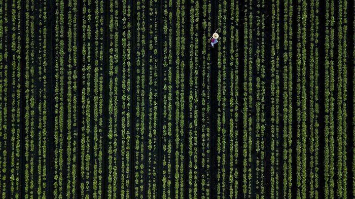 Frame From The Matrix (1999) Where A Mouse Cursor Was Accidentally Left In.