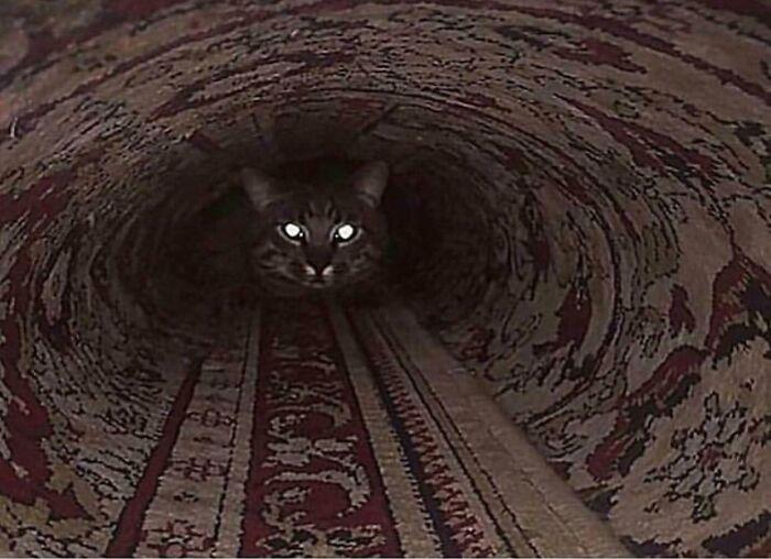 Train Speeding Down A Old Tunnel