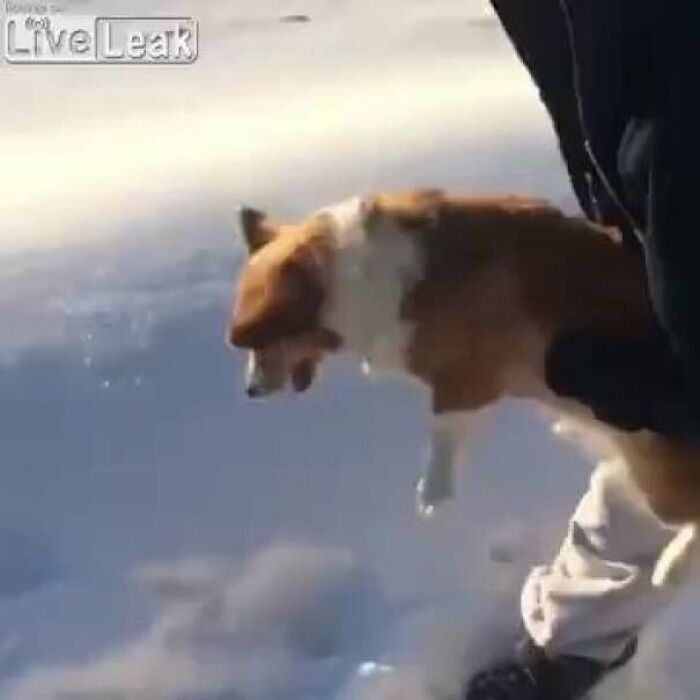 Throwing A Dog Out Of A Helicopter