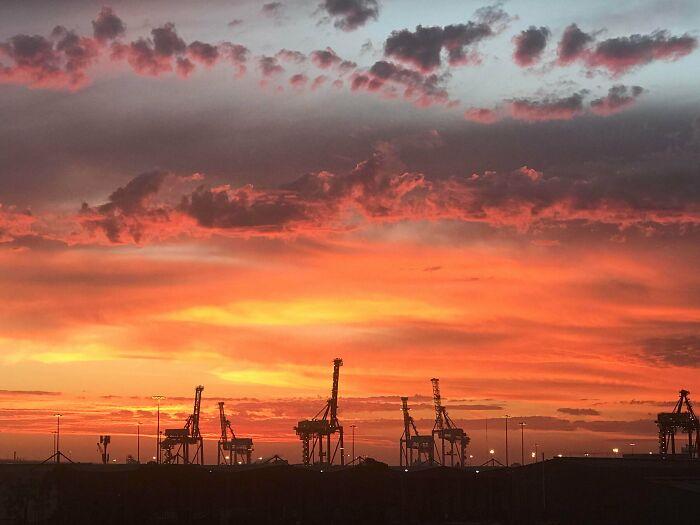 Giraffes Enjoy A Serengeti Sunset