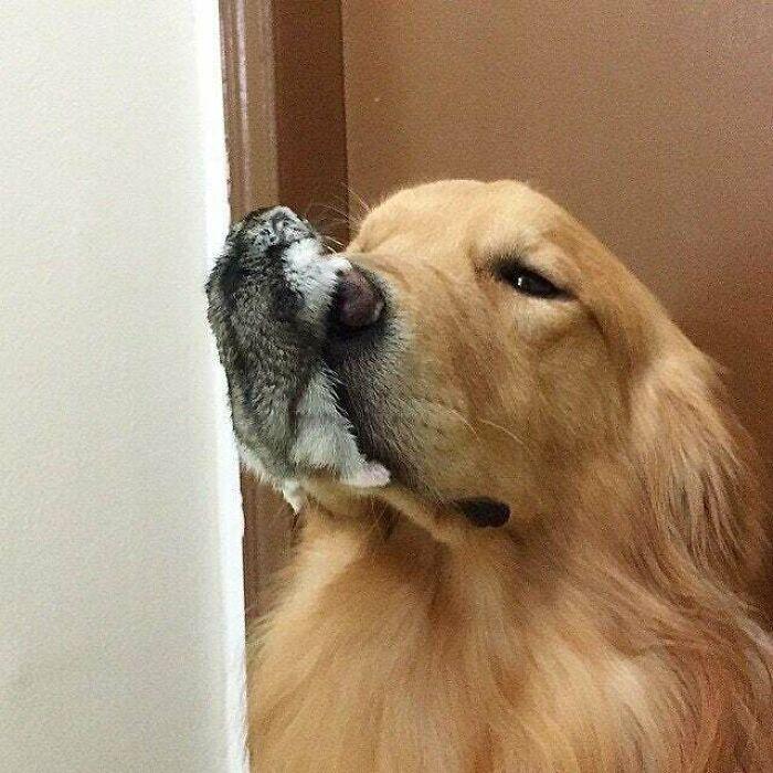Dog With Horribly Deformed Nose