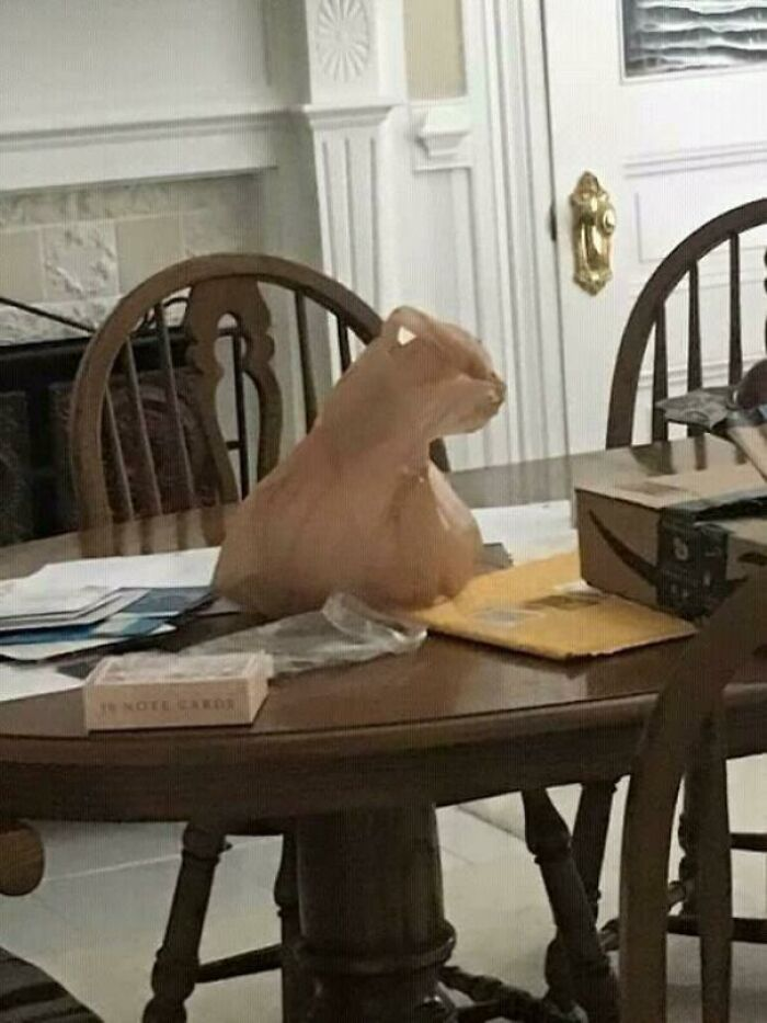 My Asshole Cat Always Loves To Sit Over The Stuff I Leave In The Table...