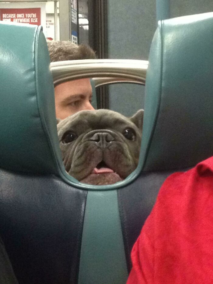On The Train And Saw This Friendly Face