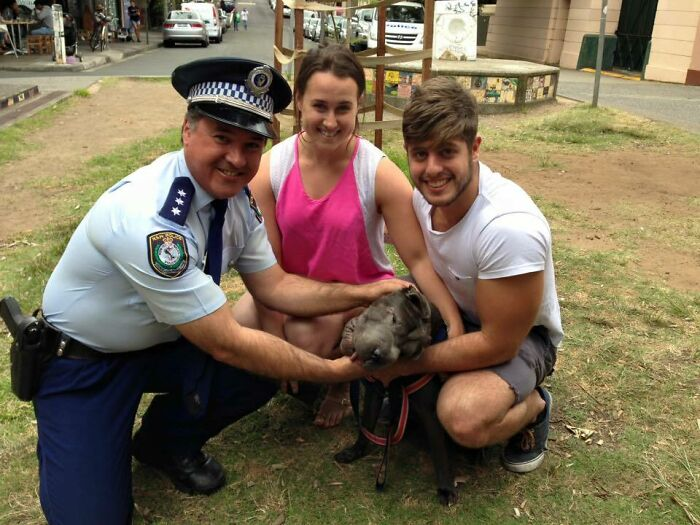 """A Seven-Month-Old Shar-Pei Puppy Has Been Reunited With His Owners After Allegedly Being """"Dog-Napped"""" In Newtown"""