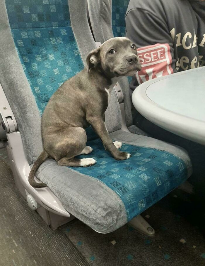 This Is Athena. It's Her First Train Trip And She's A Little Scared, But Being Brave As Heck