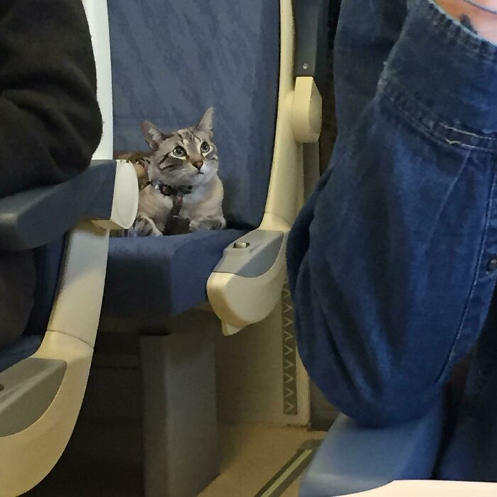 This Little Kitty Had Its Own Seat On The Three Hour Train Ride I Was On In Spain! It Sat So Nicely For The Whole Time