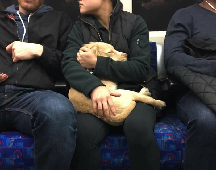 Hush Little Baby, Don't Say A Word. Found Them In A Train In London