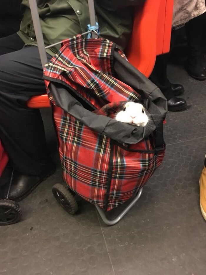 My Friend Saw This Guy On The Metro