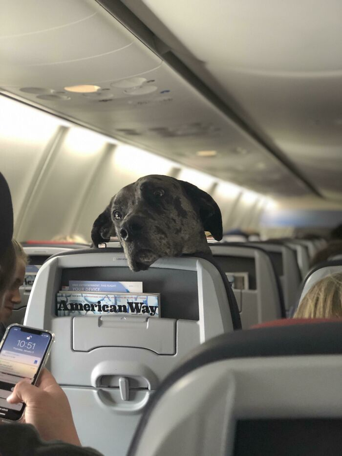 """Is Airplane Mode A Joke To You Karen?"""