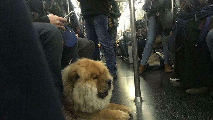 Subway Lion