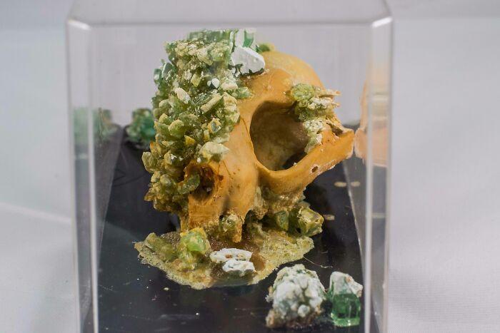 I Grow Crystals On Skulls As A Hobby