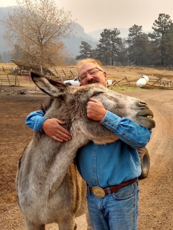Colorado Man Reunited With His Donkey, Ennis, After Fire Swept Through His Town