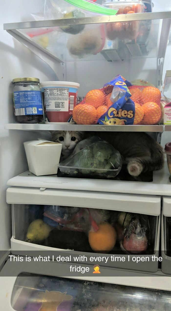 We Adopted A Kitten Last Month... We Now Have Nightly Ritual Of Checking The Fridge And Other Small Spaces To Make Sure He's Not Trapped Anywhere Before We Go To Bed