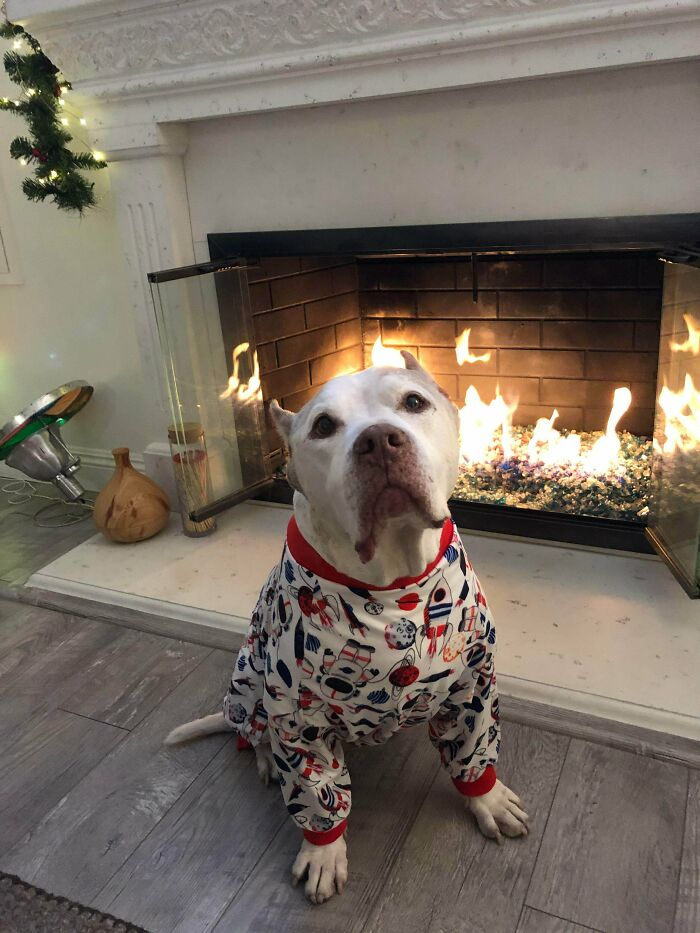 Our Recently Adopted Old Pup Is Enjoying His New Rocket Jammies