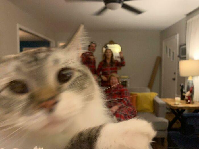 Cat Ruins Christmas Photo