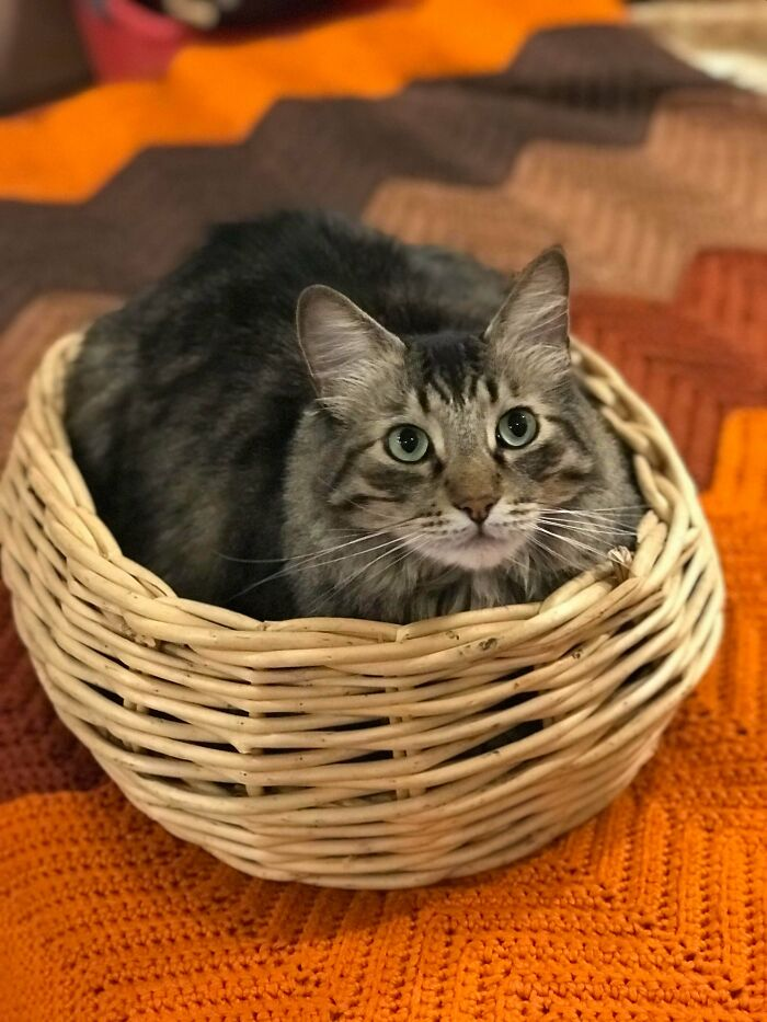 75 Cents For This Basket. Cat Was Found For Free At The Dump 5 Years Ago