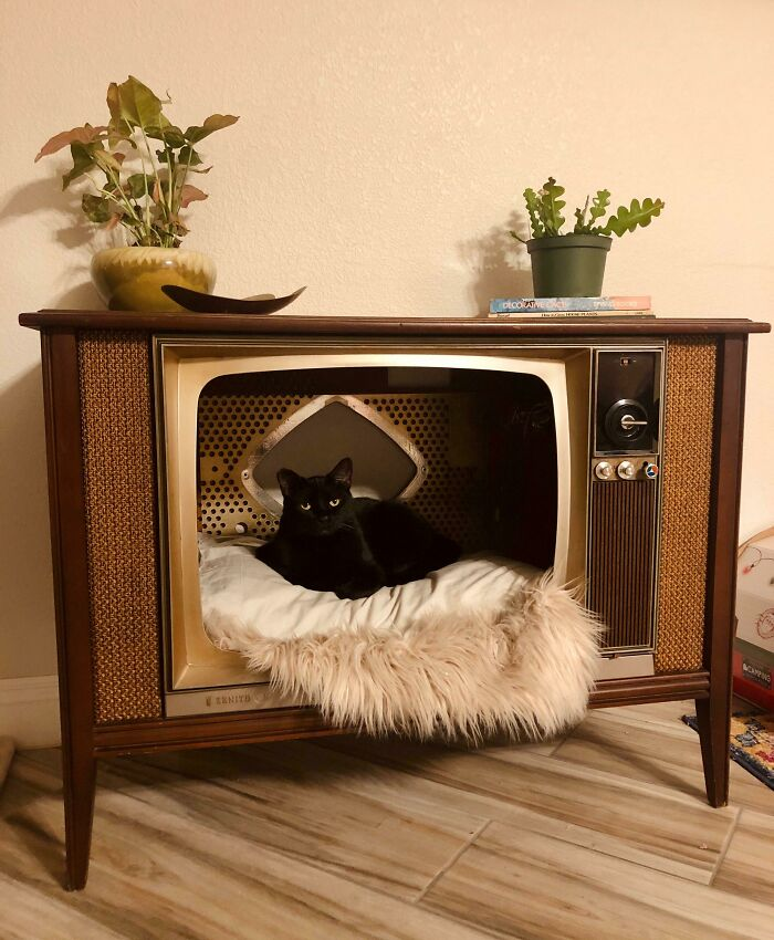 1960s Zenith TV. We Took Out The Tube. Books, Bimorphic Dish, And Glazed California Pottery Plant Pot Were Thrifted Too
