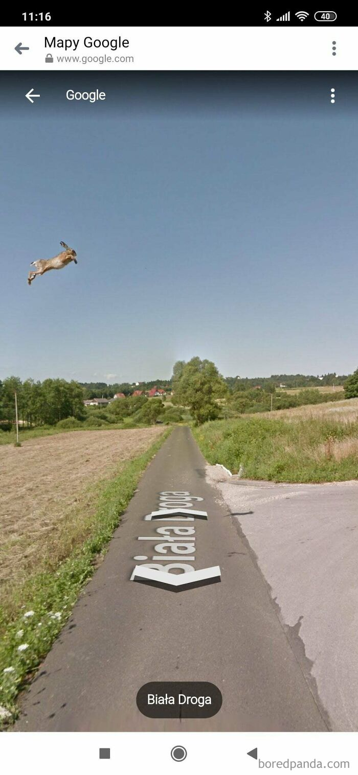 This Hare Caught On Google Street