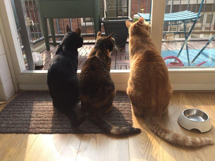 The 3 Amigos. Chuckie, Lapjes & Gigi
