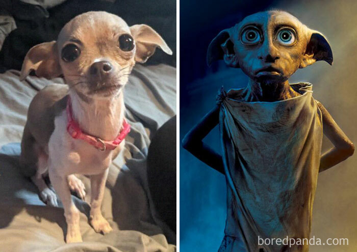 Dobby And Bella